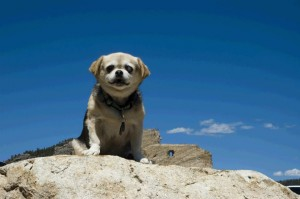 Location Independence and Traveling by Car with an Elderly Dog