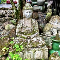 stone buddha at garden ponds nursery