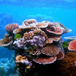 Australia's Wonder of the Natural World: The Great Barrier Reef