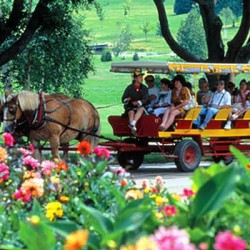 Are Carriage Rides a Tourist Trap?