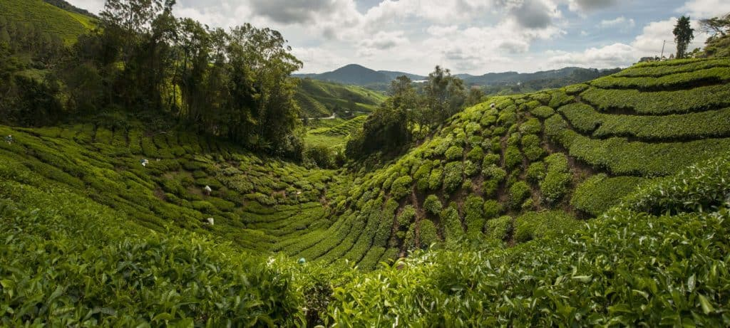 Cameron Highlands places to visit in Malaysia