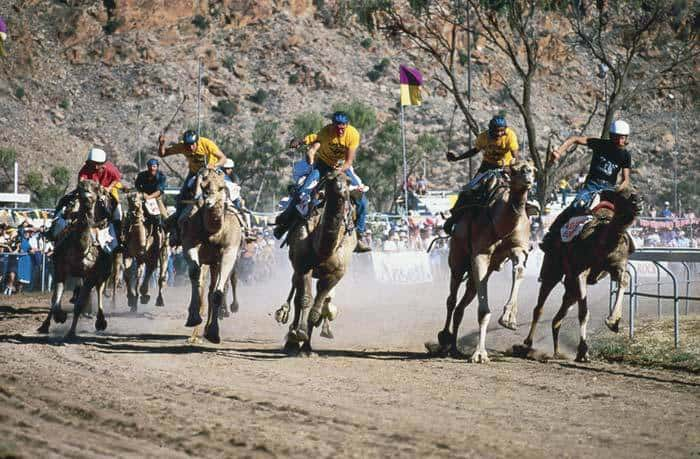 unique bucket list ideas for australia camel racing