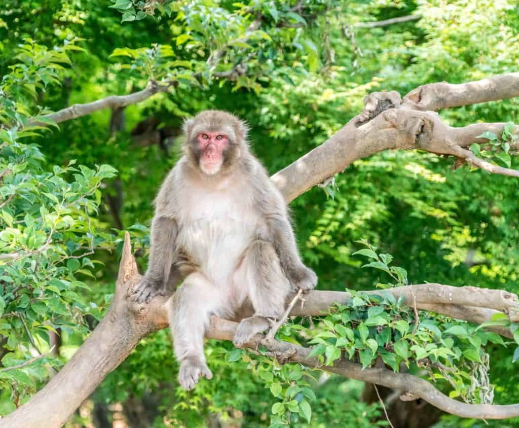 crazy fun things to do in Japan monkey park