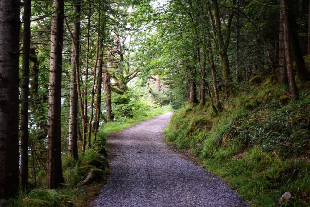 walks in sligo: slish wood